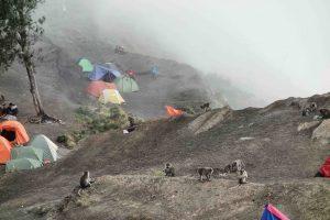 https://www.rinjanisenarutrekking.com/wp-content/uploads/2018/05/Mount-Rinjani-Trekking-on-Galery-17-300x200.jpg