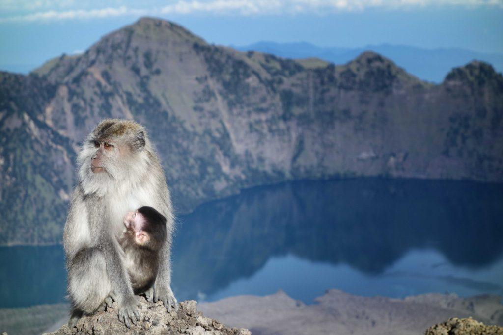 https://www.rinjanisenarutrekking.com/wp-content/uploads/2018/05/Mount-Rinjani-Trekking-on-Galery-5-1024x683.jpg